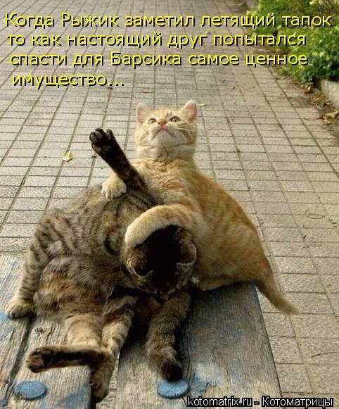 Котоматрица: Когда Рыжик заметил летящий тапок то как настоящий друг попытался  спасти для Барсика самое ценное имущество...