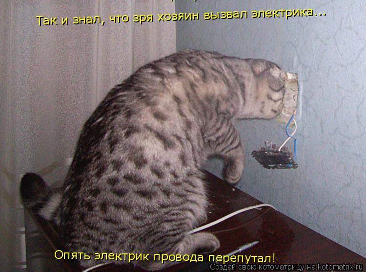 Котоматрица: Так и знал, что зря хозяин вызвал электрика... Опять электрик провода перепутал! Опять электрик провода перепутал!