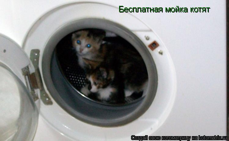 Котоматрица: Бесплатная мойка котят
