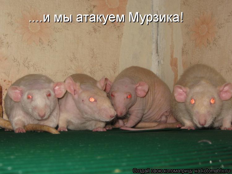 Котоматрица: ....и мы атакуем Мурзика!