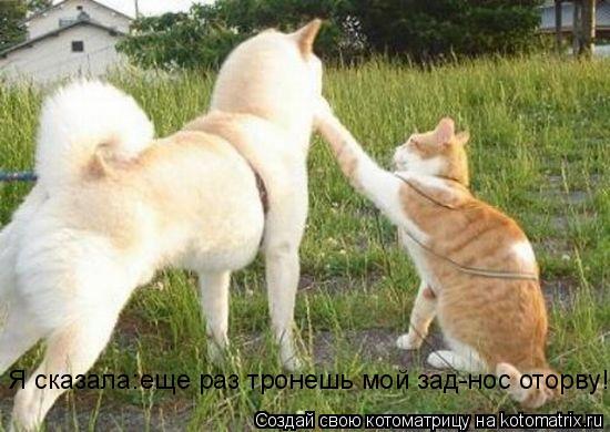 Котоматрица: Я сказала:еще раз тронешь мой зад-нос оторву!