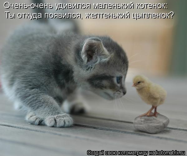 Котоматрица: Очень-очень удивился маленький котенок: Ты откуда появился, желтенький цыпленок?