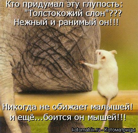 """Котоматрица: Кто придумал эту глупость: """"Толстокожий слон""""??? Никогда не обижает малышей! Нежный и ранимый он!!! и ещё...боится он мышей!!!"""