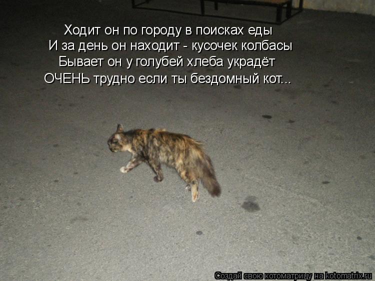 Котоматрица: И за день он находит - кусочек колбасы Бывает он у голубей хлеба украдёт Ходит он по городу в поисках еды ОЧЕНЬ трудно если ты бездомный кот..
