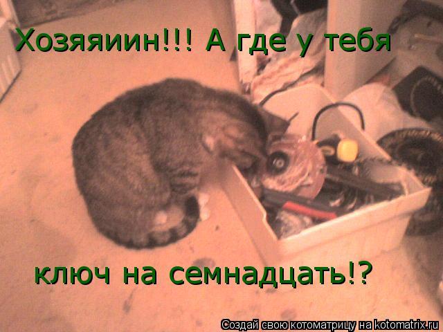 Котоматрица: ключ на семнадцать!?  Хозяяиин!!! А где у тебя