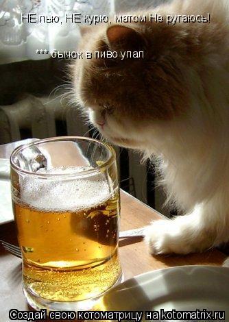 Котоматрица: НЕ пью, НЕ курю, матом Не ругаюсь! *** бычок в пиво упал