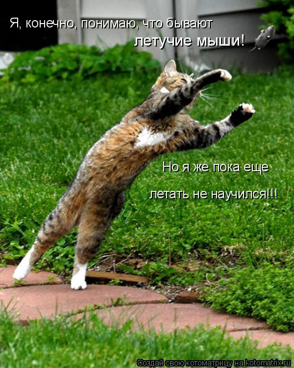 Котоматрица: Я, конечно, понимаю, что бывают летучие мыши! Но я же пока еще летать не научился!!!