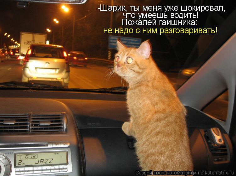 Котоматрица: -Шарик, ты меня уже шокировал,  что умеешь водить! Пожалей гаишника: не надо с ним разговаривать!