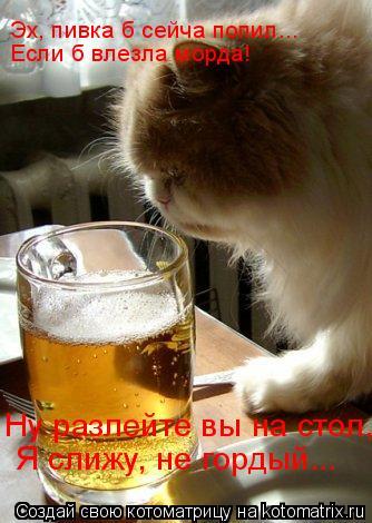 Котоматрица: Эх, пивка б сейча попил...  Если б влезла морда! Я слижу, не гордый... Ну разлейте вы на стол,