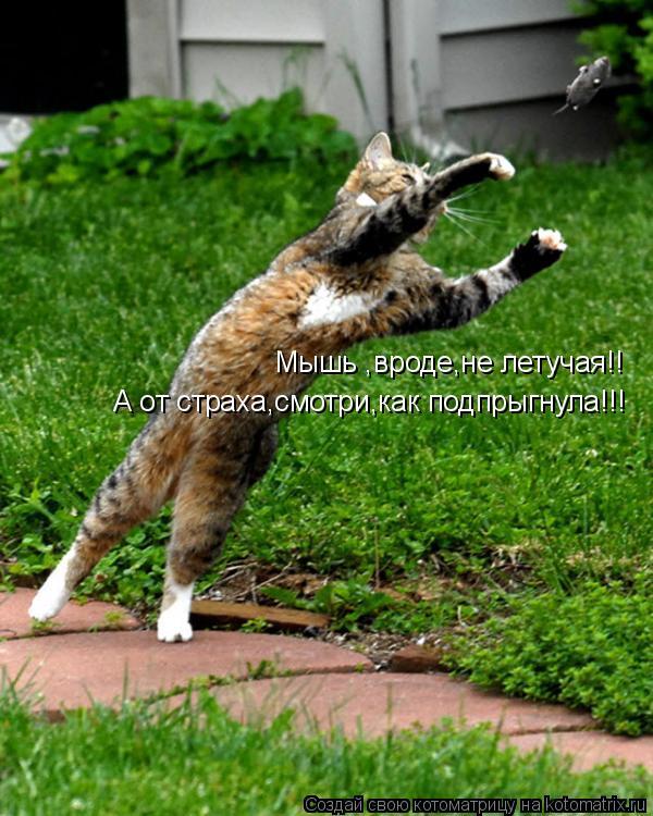 Котоматрица: Мышь ,вроде,не летучая!! А от страха,смотри,как подпрыгнула!!!