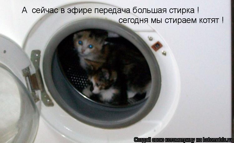 Котоматрица: А  сейчас в эфире передача большая стирка !  сегодня мы стираем котят !