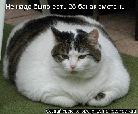 Котоматрица: Не надо было есть 25 банак сметаны!...