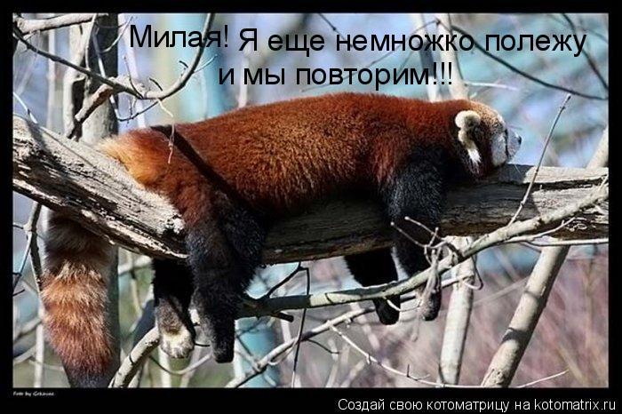 Котоматрица: Милая! Я еще немножко полежу и мы повторим!!!
