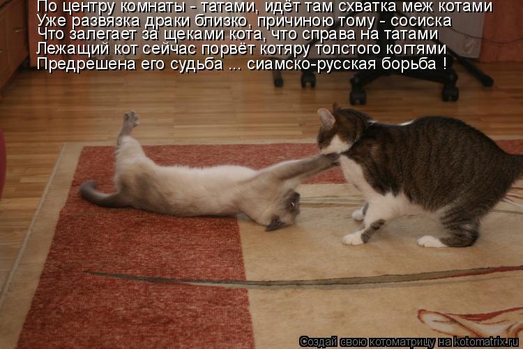 Котоматрица: По центру комнаты - татами, идёт там схватка меж котами Уже развязка драки близко, причиною тому - сосиска Что залегает за щеками кота, что сп