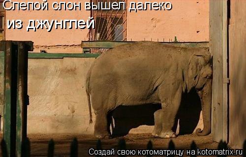 Котоматрица: Слепой слон вышел далеко  из джунглей из джунглей