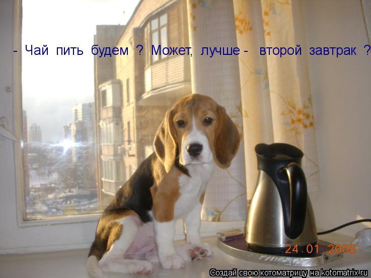 Котоматрица: -  Чай  пить  будем  ?  Может,  лучше -   второй  завтрак  ?