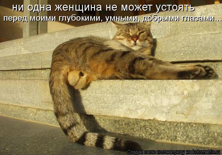 Котоматрица: ни одна женщина не может устоять перед моими глубокими, умными, добрыми глазами...