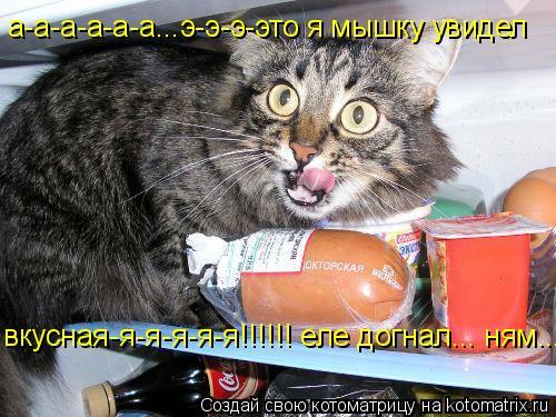Котоматрица: а-а-а-а-а-а...э-э-э-это я мышку увидел вкусная-я-я-я-я-я!!!!!! еле догнал... ням...