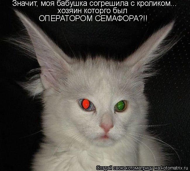 Котоматрица: Значит, моя бабушка согрешила с кроликом... хозяин которго был ОПЕРАТОРОМ СЕМАФОРА?!!