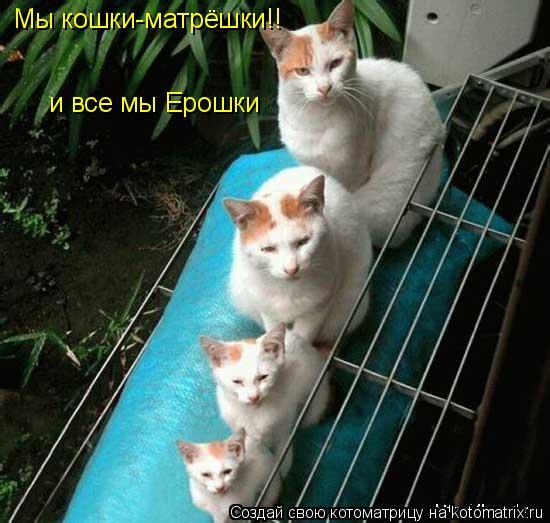 Котоматрица: Мы кошки-матрёшки!! и все мы Ерошки