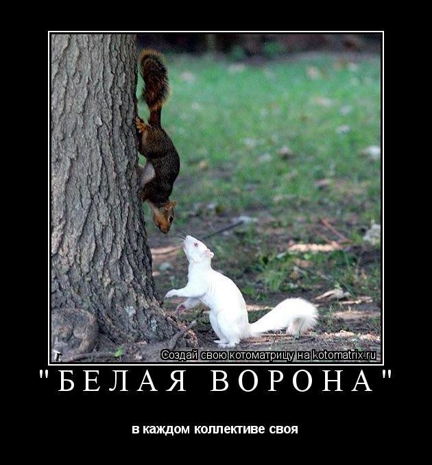 """Котоматрица: """"Белая ворона"""" в каждом коллективе своя"""
