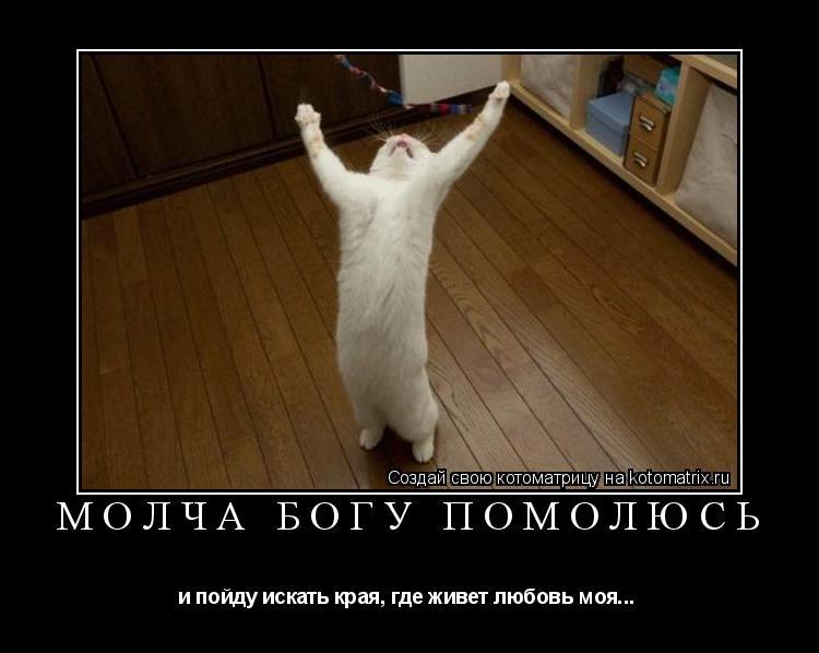 Котоматрица: Молча богу помолюсь и пойду искать края, где живет любовь моя...