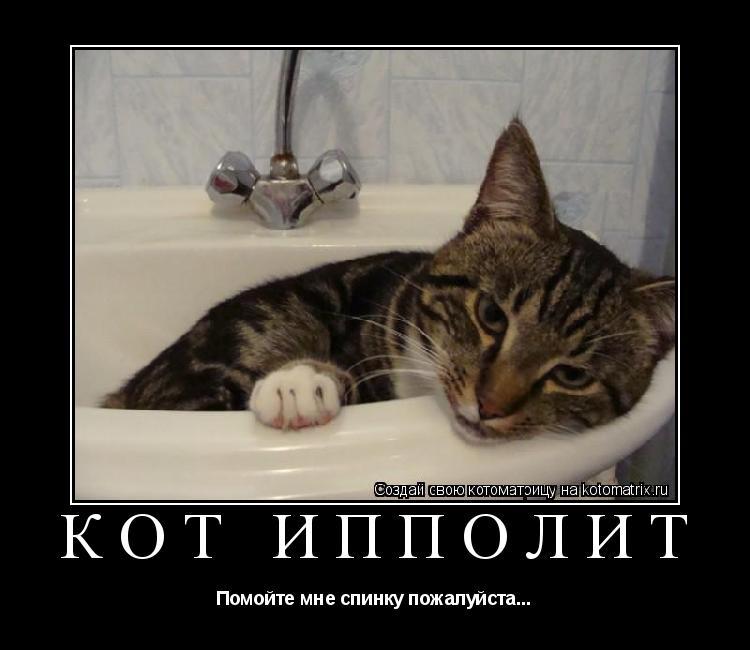 Котоматрица:  Кот Ипполит Помойте мне спинку пожалуйста...