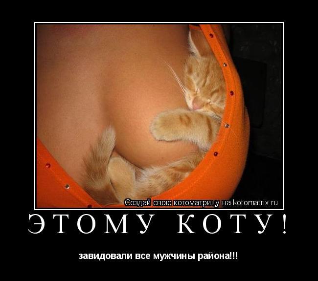 Котоматрица: Этому коту! завидовали все мужчины района!!!