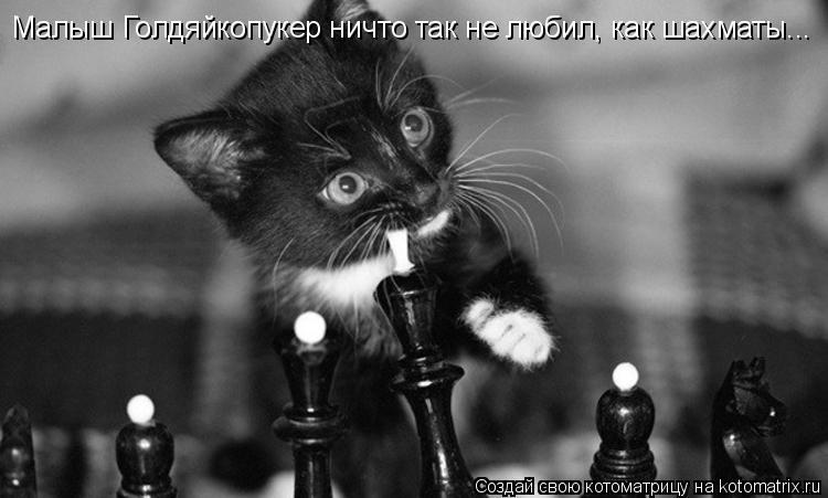 Котоматрица: Малыш Голдяйкопукер ничто так не любил, как шахматы...