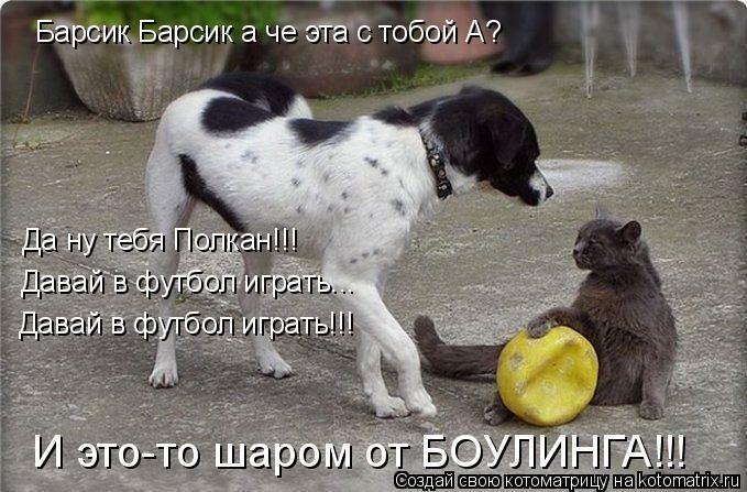 Котоматрица: Барсик Барсик а че эта с тобой А? Да ну тебя Полкан!!! Давай в футбол играть...  Давай в футбол играть!!! И это-то шаром от БОУЛИНГА!!!