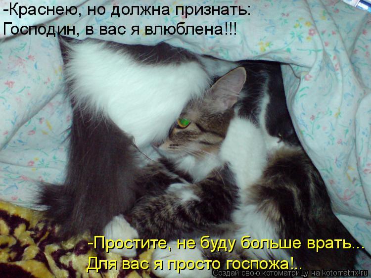 Котоматрица: -Краснею, но должна признать: Господин, в вас я влюблена!!! -Простите, не буду больше врать... Для вас я просто госпожа!..