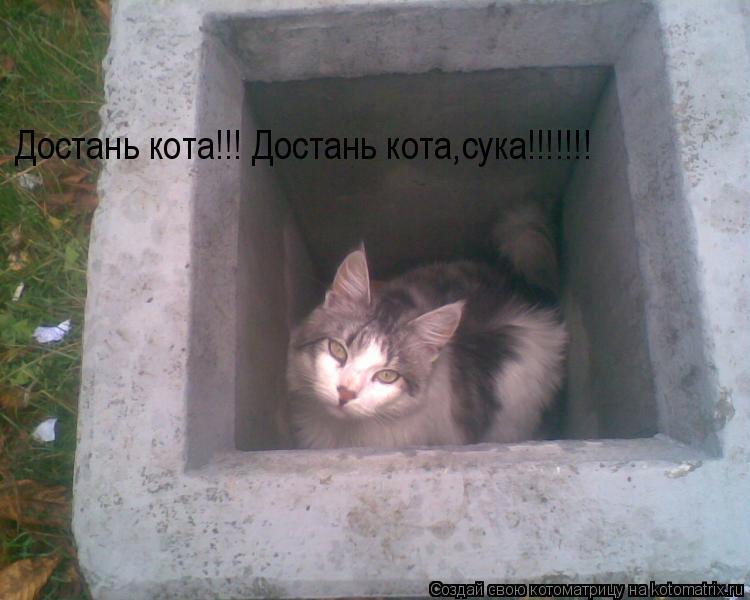 Котоматрица: Достань кота!!! Достань кота,сука!!!!!!!
