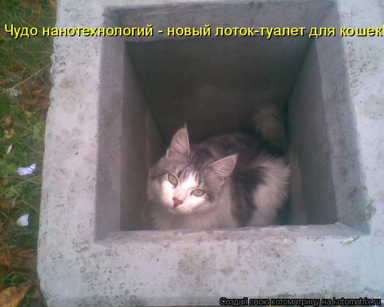 Котоматрица: Чудо нанотехнологий - новый лоток-туалет для кошек!!!!!