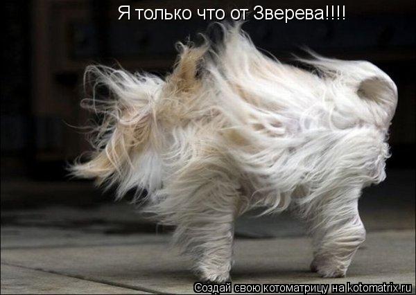 Котоматрица: Я только что от Зверева!!!!