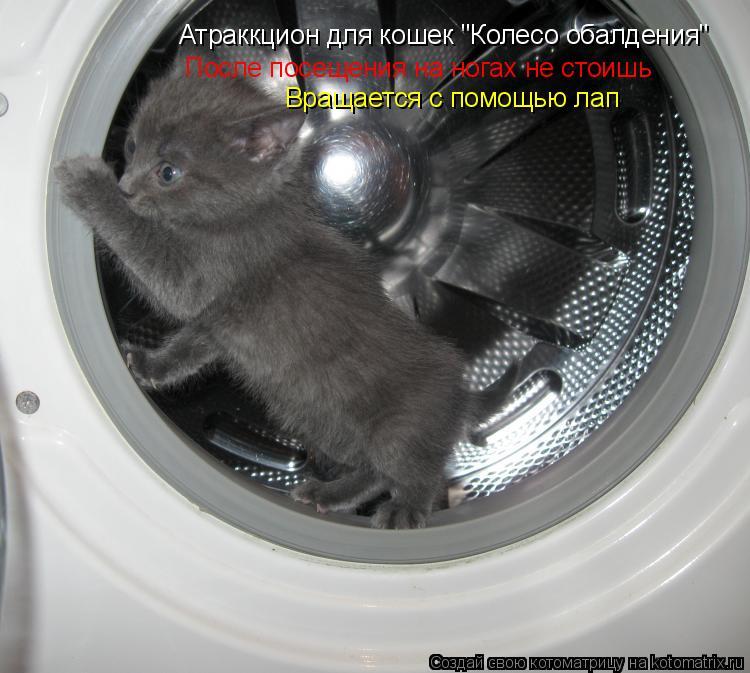 """Котоматрица: Атраккцион для кошек """"Колесо обалдения"""" После посещения на ногах не стоишь Вращается с помощью лап"""