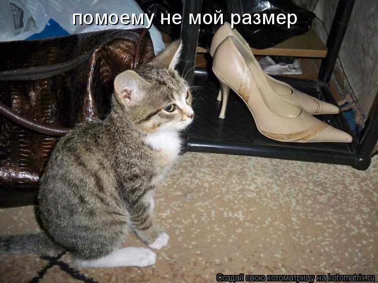 Котоматрица: помоему не мой размер