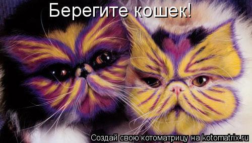 Котоматрица: Берегите кошек!