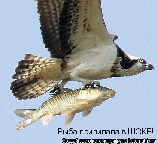 Котоматрица: Рыба прилипала в ШОКЕ!