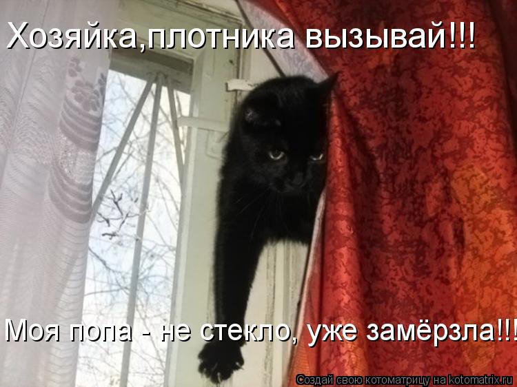 Котоматрица: Хозяйка,плотника вызывай!!! Моя попа - не стекло, уже замёрзла!!!