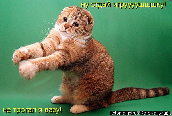 Котоматрица: ну отдай игруууушшшку! не трогал я вазу!