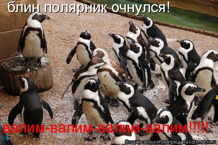 Котоматрица: блин полярник очнулся! валим-валим-валим-валим!!!!!