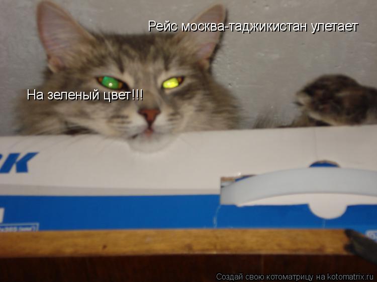 Котоматрица: Рейс москва-таджикистан улетает На зеленый цвет!!!