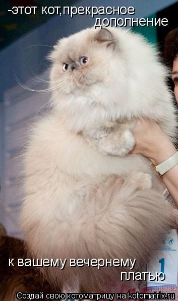 Котоматрица: -этот кот,прекрасное  дополнение к вашему вечернему  платью