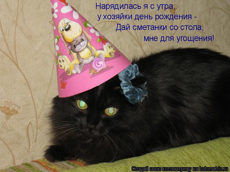 Котоматрица: Нарядилась я с утра, у хозяйки день рождения - Дай сметанки со стола,  мне для угощения!