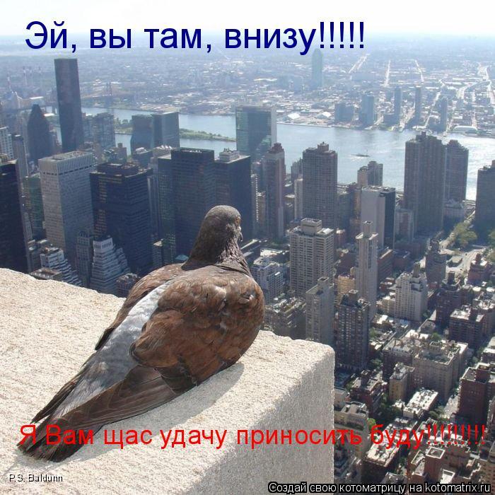 Котоматрица: Эй, вы там, внизу!!!!! Я Вам щас удачу приносить буду!!!!!!!!! P.S. Baldunn