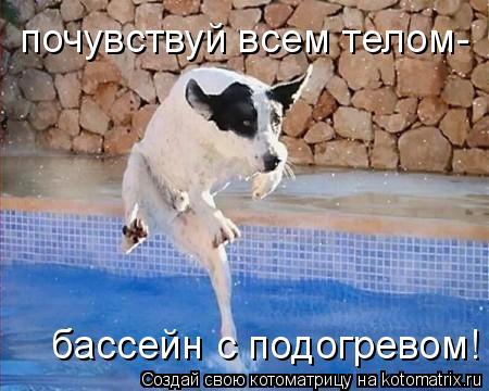 Котоматрица: почувствуй всем телом- бассейн с подогревом!