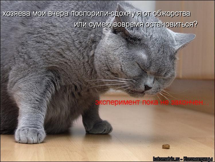 Котоматрица: хозяева мои вчера поспорили-сдохну я от обжорства или сумею вовремя остановиться? эксперимент пока не закончен...