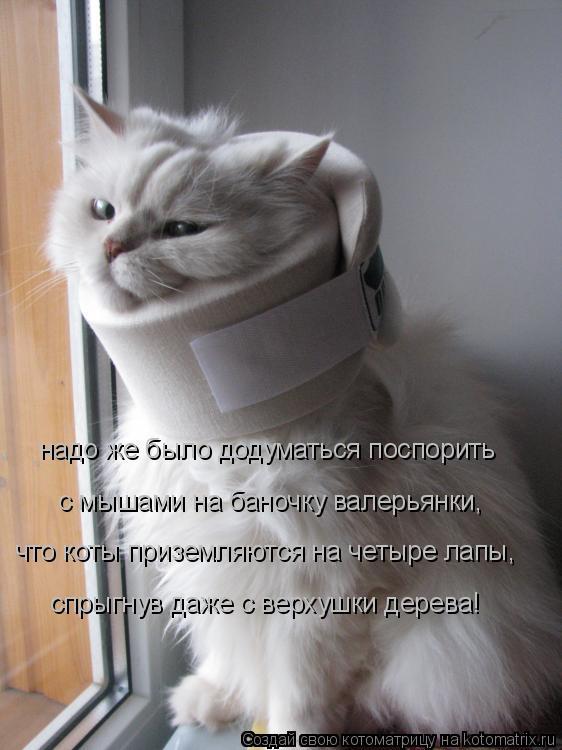 Котоматрица: надо же было додуматься поспорить спрыгнув даже с верхушки дерева! что коты приземляются на четыре лапы, с мышами на баночку валерьянки,