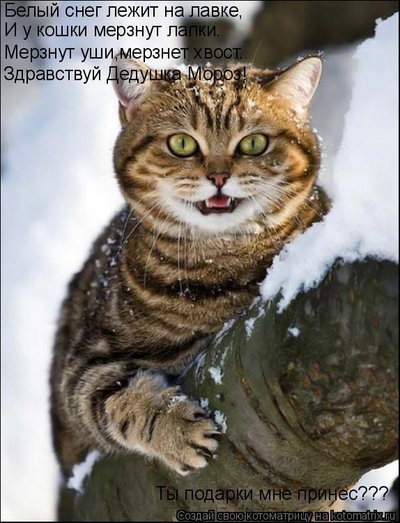Котоматрица: Белый снег лежит на лавке, И у кошки мерзнут лапки. Мерзнут уши,мерзнет хвост.. Здравствуй Дедушка Мороз! Ты подарки мне принес???