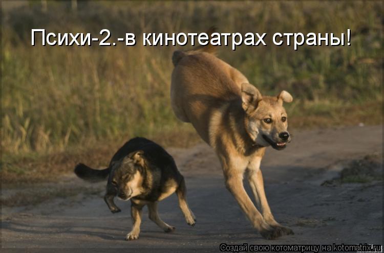 Котоматрица: Психи-2.-в кинотеатрах страны!
